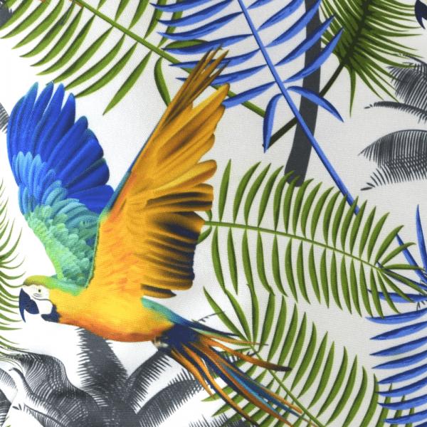 zoom perroquet 1000x